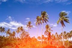 Оранжевый свет на пальмах кокосов Тропический ландшафт с ладонями Стоковое Изображение