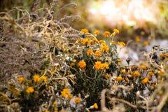 Оранжевый свет Autemn Стоковая Фотография