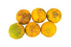 Оранжевый тухло пакостно 6 белизна изолированная предпосылкой Стоковое Фото