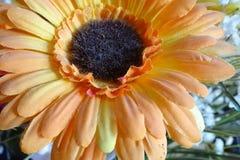 Оранжевый цветок ткани подробно Стоковая Фотография