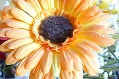Оранжевый цветок ткани подробно Стоковое Изображение RF