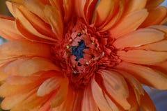 Оранжевый цветок ткани подробно Стоковые Фотографии RF