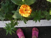 Оранжевый цветок, Украина, - июль Стоковое Изображение RF