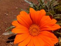 Оранжевый цвет в природе стоковые фотографии rf
