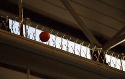 Оранжевый шарик получает вставленным в анти--pidgeons иглах Стоковые Фото