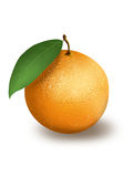 Оранжевый Стоковое Изображение RF