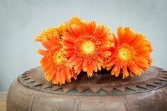 Оранжевый Gerbera в вазе гончарни Стоковые Изображения RF