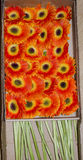 Оранжевый Gerbera в корзине Стоковые Фотографии RF
