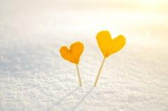 2 оранжевых сердца tangerine на белой предпосылке снега для влюбленности и концепции дня валентинок St Стоковое Изображение