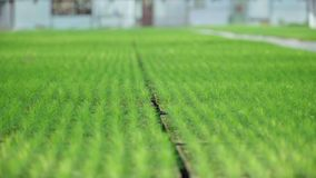 Оранжерея для заводов и роста деревьев Расти сосен Hydroponic ферма видеоматериал