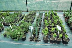 Оранжерея для растя саженцев орнаментальных кустов и деревьев стоковая фотография