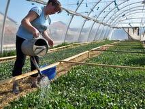 Оранжерея для растущих саженцев vegetable_3 Стоковое Изображение