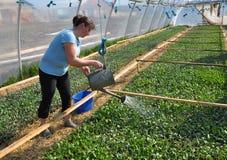 Оранжерея для растущих саженцев vegetable_4 Стоковые Фото