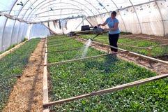 Оранжерея для растущих саженцев vegetable_5 Стоковое фото RF