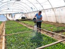 Оранжерея для растущих саженцев vegetable_6 Стоковое фото RF