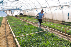 Оранжерея для растущих саженцев vegetable_7 Стоковые Фотографии RF