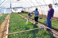Оранжерея для растущих саженцев vegetable_10 Стоковые Изображения RF
