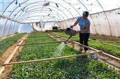 Оранжерея для растущих саженцев vegetable_9 Стоковая Фотография