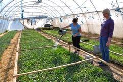Оранжерея для растущих саженцев vegetable_11 Стоковое фото RF