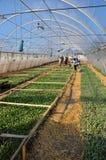 Оранжерея для растущих саженцев vegetable_12 Стоковое Изображение