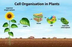 Организация клетки в заводах бесплатная иллюстрация