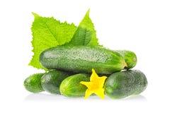 Органическая здоровая еда Овощи свежего зеленого огурца естественные при лист и цветок изолированные на белой предпосылке изображ стоковые изображения