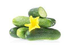 Органическая здоровая еда Овощи свежего зеленого огурца естественные с желтым цветком изолированным на белой предпосылке изображе стоковые изображения