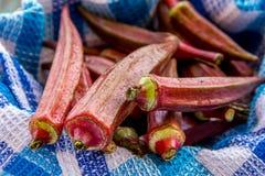 Органическая красная бамия стоковые фотографии rf