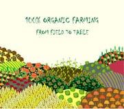 Органическая предпосылка сельского хозяйства Рамка с plenteous ландшафтом полей Стоковая Фотография