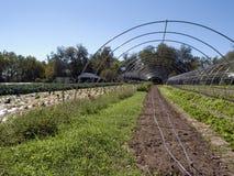 Органическая ферма Стоковые Изображения