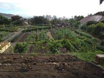 Органическая ферма Стоковое Изображение