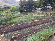 Органическая ферма Стоковые Изображения RF