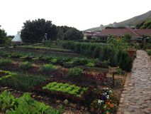 Органическая ферма Стоковое фото RF