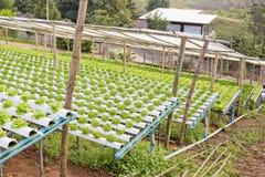 Органическая hydroponic vegetable ферма культивирования Стоковые Фотографии RF