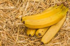 Органические бананы, латинское †«musa Банан приносить на естественной предпосылке соломы стоковые фото