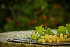 Органические виноградины вина Chenin Blanc в Калифорнии 4 Стоковое фото RF