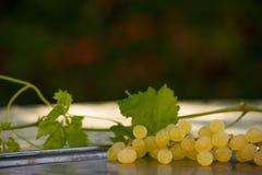 Органические виноградины вина Chenin Blanc в Калифорнии 5 Стоковая Фотография RF