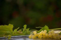 Органические виноградины вина Chenin Blanc в Калифорнии 6 Стоковые Изображения