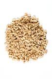 Органические зерна ячменя Стоковые Фотографии RF