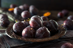 Органические зрелые фиолетовые сливы чернослива Стоковая Фотография RF