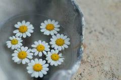 Органические изначальные цветки здоровья стоковые изображения