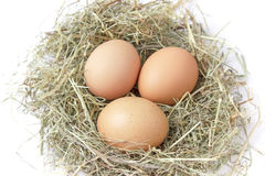 Органические коричневые яичка в гнезде сена на белой предпосылке Стоковые Фотографии RF