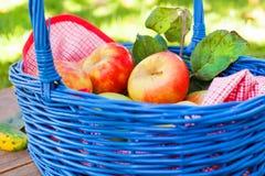 Органические красные яблоки в корзине напольной сад Сад осени Стоковое Фото