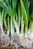 Органические лук-пореи Стоковые Изображения