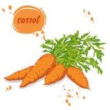 Органические моркови овощей иллюстрация вектора