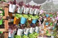 Органические овощи в пластичных коробках Стоковое Изображение RF