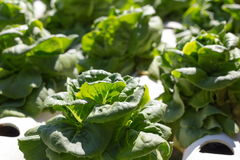Органические овощи на трубе водопровода стоковое фото rf