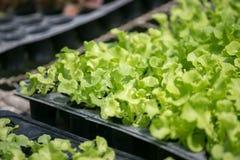Органические овощи фермы Стоковое Изображение
