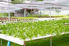 Органические овощи фермы Стоковая Фотография