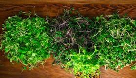 органические ростки зеленого цвета смешивания Стоковое фото RF
